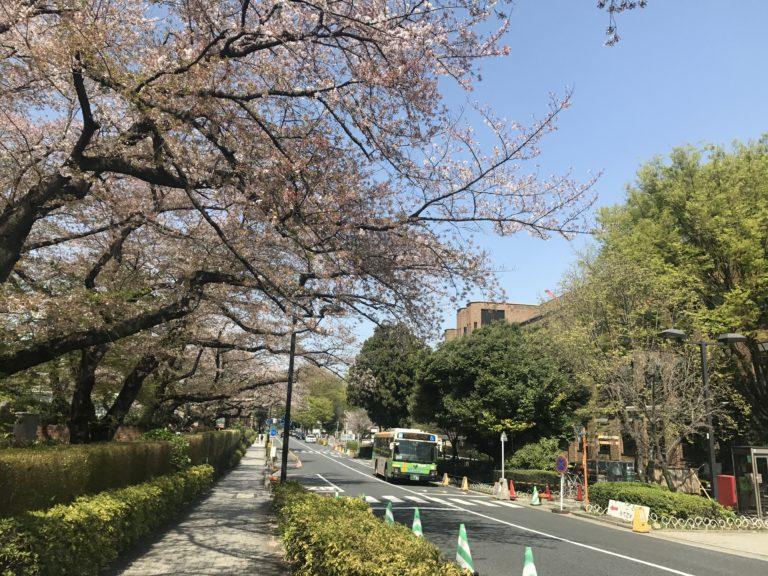 東大病院前の桜